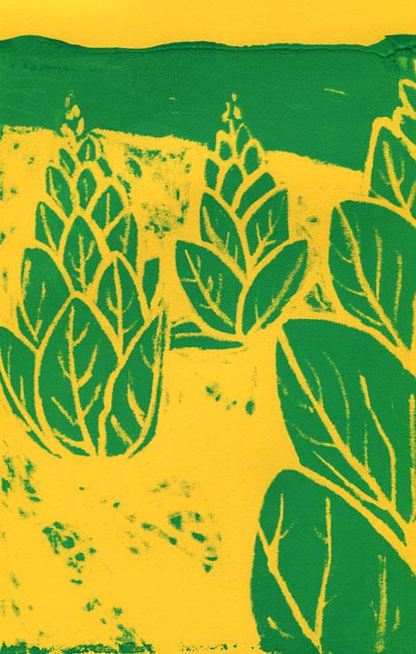 tobacco-plants-crayon-resist-silkscreen