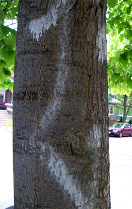 How To Remove Graffiti on Trees | Shellie Lewis' Blog