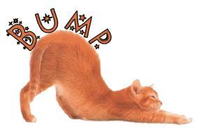 Bumpcat