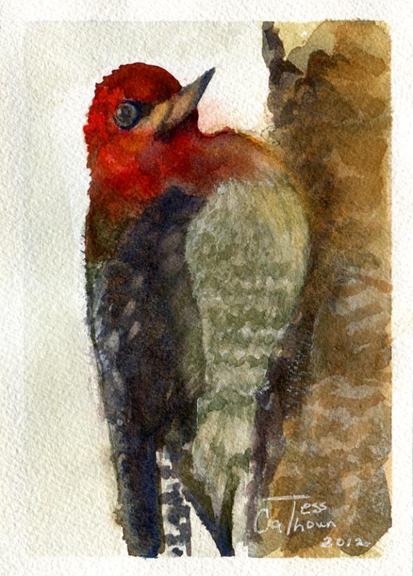 Tess-Calhoun-Red-Headed-Flicker