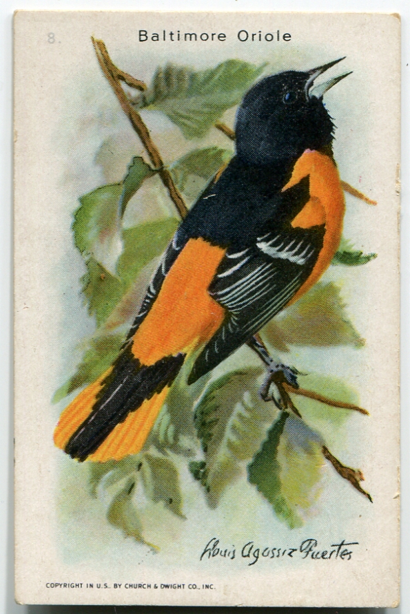 Ad Card Oriole front