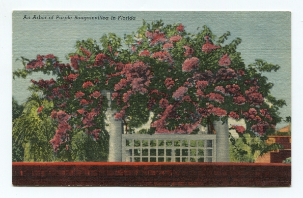 117 antique postcard