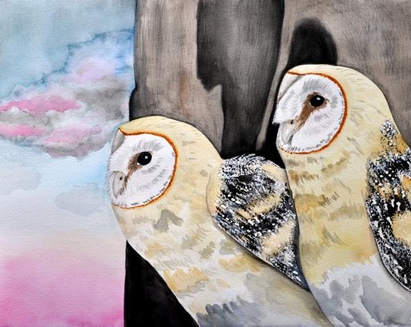 Barn Owls 2014