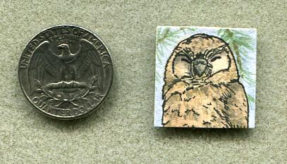 Inchie Owl