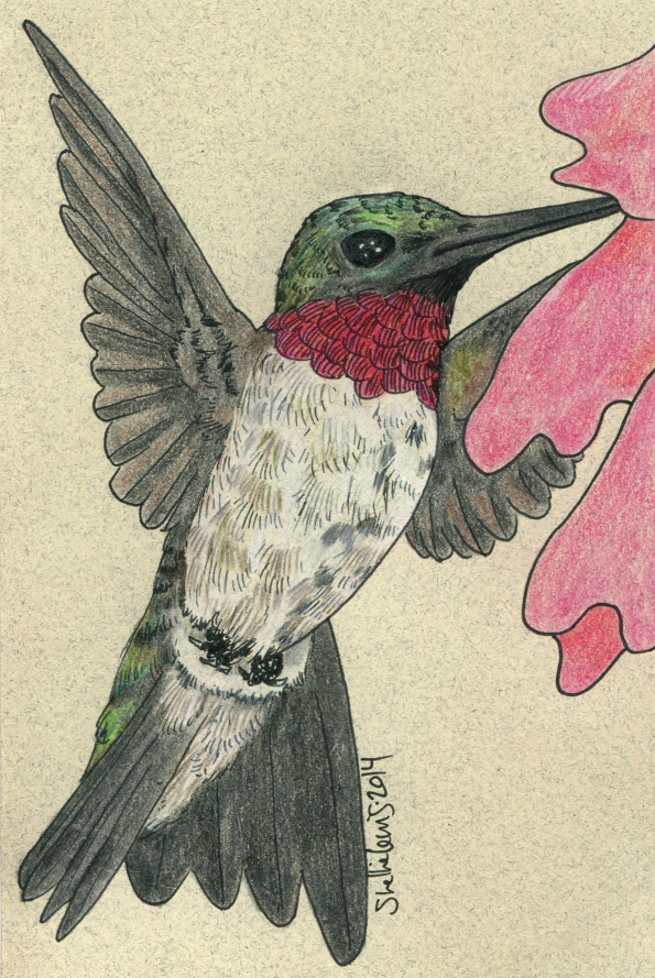 Mail Art Hummingbird 2014