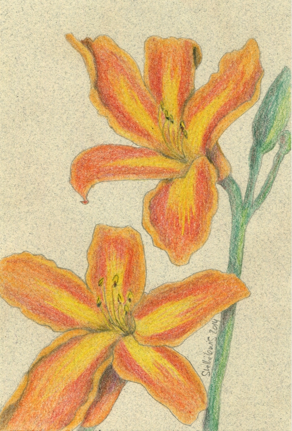 Mail Art Orange Day Lillies 2014