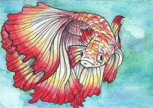 ATC Fire Betta, Micron pen and watercolour pencil on illustration board
