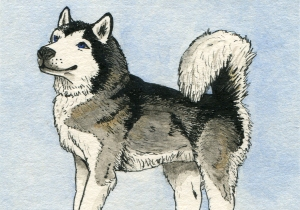 ATC Malamute, pen and ink with watercolour. This was sent to a trader whose Malamute sadly had passed away.