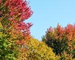 fall trees 02