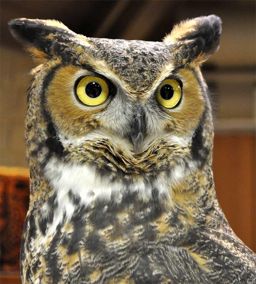 free owl photographs you can use shellie lewis u0027 blog