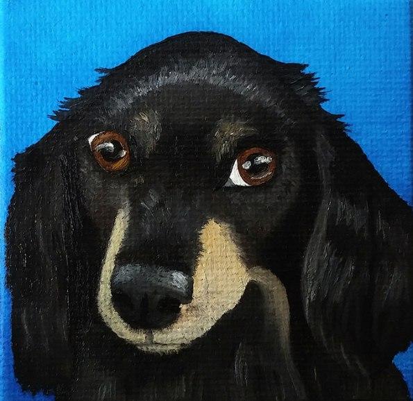 Dacky-dachshund-Shellie-Lewis-2016-web
