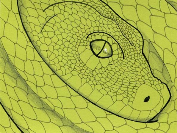Python by Shellie Lewis 2015 web