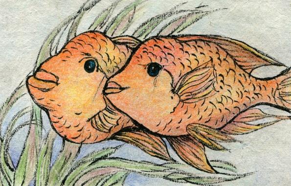 apc-midas-cichlids-2016-shellie-lewis-web